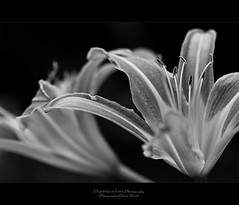 . ..drabness.. . (oliver's | photography) Tags: bw photoshop canon eos flickr raw natural image  adobe copyrighted pixelwork blackwhitephotos oliverhoell pixelwork11photography allphotoscopyrighted