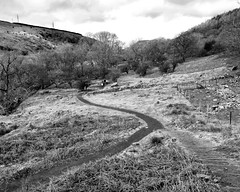 Path to the waterfall - Black and White (Etrusia UK) Tags: uk greatbritain trees people blackandwhite nature grass wales landscape geotagged nikon britishisles zoom unitedkingdom britain path heather steps tracks sigma wideangle f16 gb pictureperfect gwynedd d300 braken sigma1850mm 1850mm sigmalens fastlens abergwyngregyn 1850mmlens nikond300 sigma1850mmlens geo:lat=5321319376381807 geo:lon=39964170234870835
