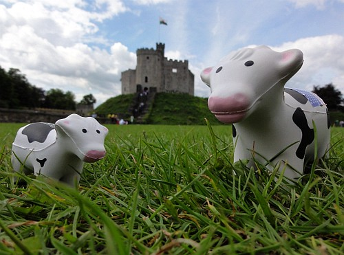 Cows at Cardiff Castle