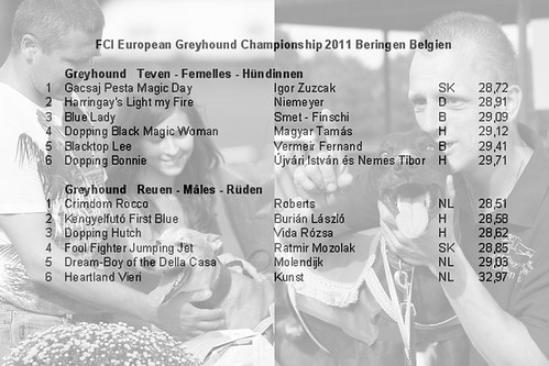 Greyhound-FCI-European-Championship-Finale-2011