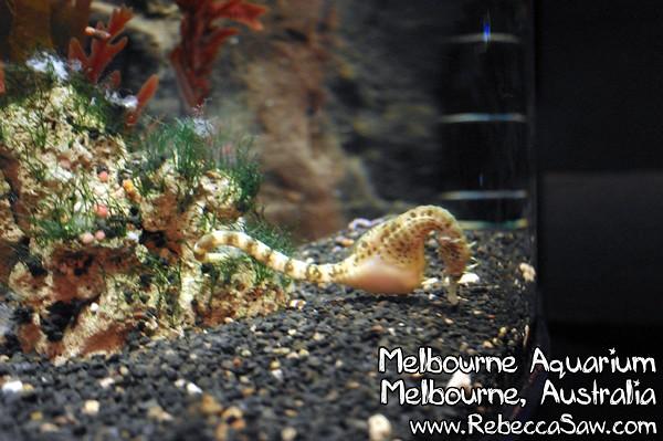 MELBOURNE AQUARIUM-28