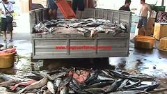 20100408 (fymac@live.com) Tags: mackerel fishing redsnapper shimano pancing angling daiwa tenggiri sarawaktourism sarawakfishing malaysiafishing borneotour malaysiaangling jiggingmaster