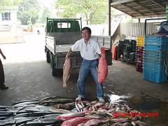 20090913 (fymac@live.com) Tags: mackerel fishing redsnapper shimano pancing angling daiwa tenggiri sarawaktourism sarawakfishing malaysiafishing borneotour malaysiaangling jiggingmaster
