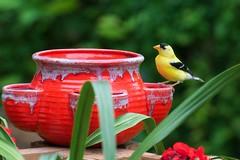 _DSC4040 (ChanHawkins) Tags: bird birds muskegon