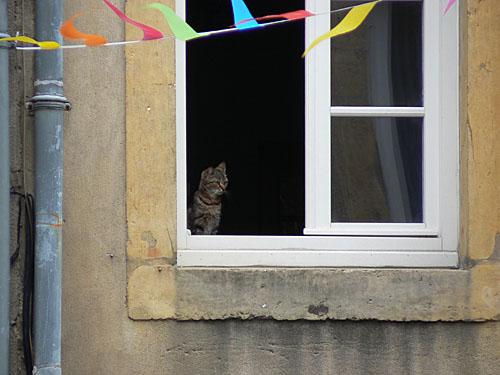chat à sa fenêtre, Metz.jpg