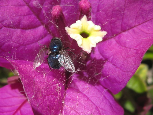 Last Moments: Trapped Fly in a Spiderweb