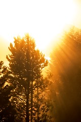 Morning Glory.. (ShanLuPhoto) Tags: morning usa sunrise golden wyoming grandtetonnationalpark
