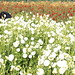 LA2011-09-02_08-39-08 IMG_3040