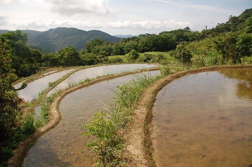 廢耕多年後重新整理、蓄水的梯田。(攝影:方韻如)