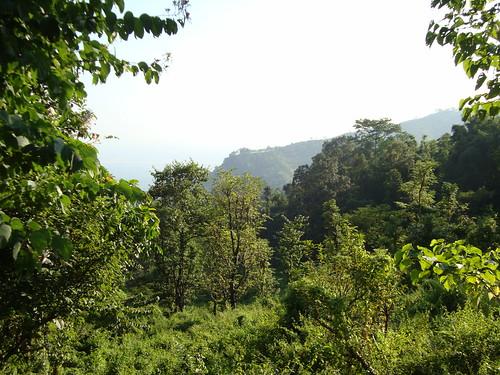 Roadside view on the way to Darjeeling