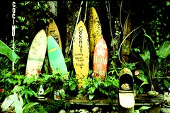 Outside of Hana, 2011 (ryantatar) Tags: road film analog 35mm hawaii islands surf culture maui hana hawaiian surfboards campfiresukuleles