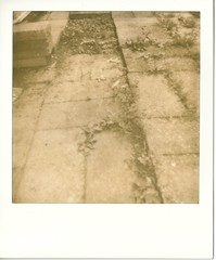 (mjohnso) Tags: polaroid weeds deadleaves patio 600 polaroid600 silvershade impossibleproject px600silvershade