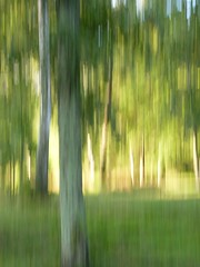 Nt (evisdotter) Tags: trees nature sunny icm camerapainting intentionalcameramovement