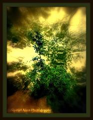 Wild Green (Nashid Alam Annanya) Tags: cameraphone life trees urban color tree green nature water forest countryside leaf experimental random leafs shining waterreflection reflrction nokian73 colorphotoaward flickraward mygearandme dpscamphone