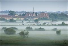 Summer Fog (adrians_art) Tags: trees houses horses urban mist field fog town earlymorning bexley erith marshes churchspire