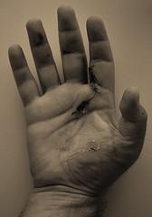 ..my new severed hand.. (max bottecchia) Tags: hand body nikond5000 people save delete delete2 delete3 delete4 delete5 delete6 delete7 delete8 delete9 delete10 deletedbydeletemeuncensored