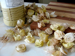 ground cherries 11