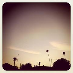 I love summer evenings.
