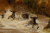 Crash landing (Nature Wanderers) Tags: africa canon wildlife masaimara kahinighoshmehta shivangmehta naturewanderers tnc11 wwwshivangmehtacom