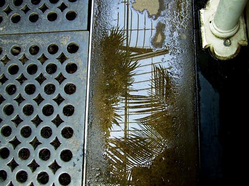 Palm House floor