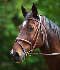 Riku (Timo Vehvilinen) Tags: summer portrait horse green animal dof bokeh hevonen 135mm canonef135mmf2l