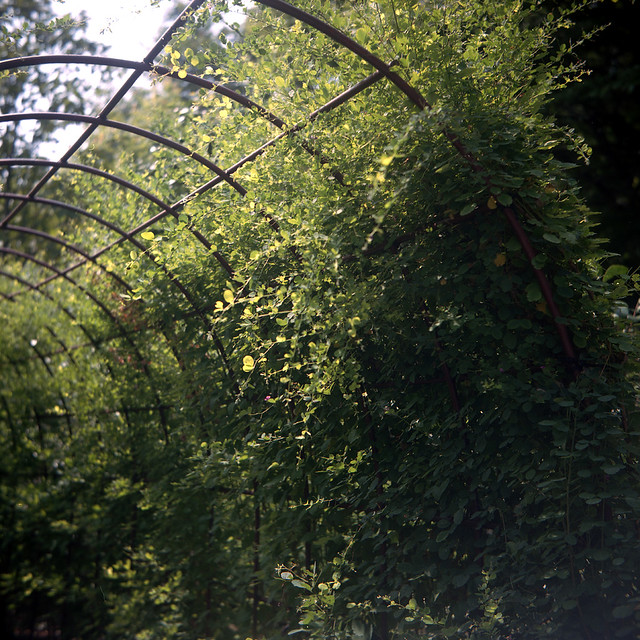 Tunnel of green #1