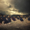 the flock (brookeshaden) Tags: selfportrait storm wind ominous surreal running clones fineartphotography texturebylesbrumes