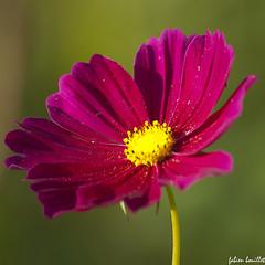 Domaine des Oiseaux - jolie fleur (fabdebaz) Tags: macro fleur photo 09 vegetation couleur aficionados arige sudouest 2011 k10d pentaxk10d justpentax collectionnerlevivantautrement domainedesoiseaux