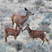 Deer & Twin Fawns by H