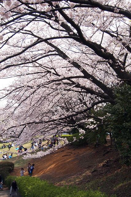 110410_135842_岸根公園