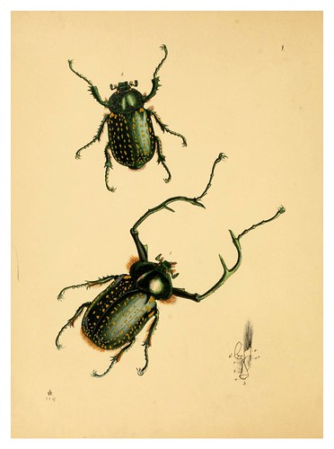 019-The cabinet of oriental entomology…1848- John Obadiah Westwood