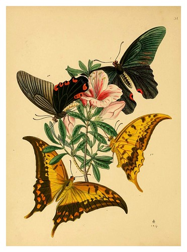 013-The cabinet of oriental entomology…1848- John Obadiah Westwood