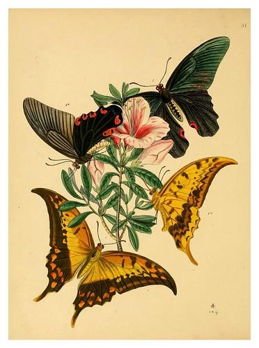 013-The cabinet of oriental entomology…1848- John Obadiah Westwood