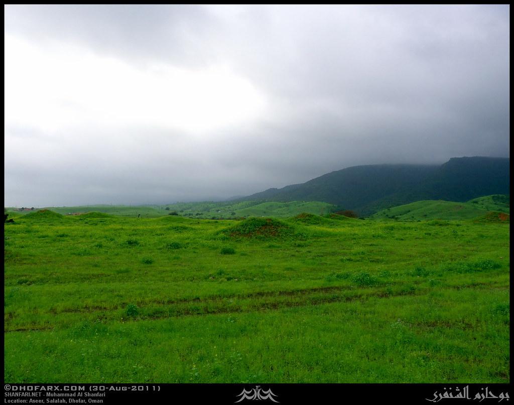 وعقبة أسير ظفار، بتاريخ 30-8-2011 6098871232_13a78e725