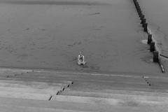 Waiting at the Bottom of the Stairs (The_Kevster) Tags: leica sea blackandwhite bw beach monochrome concrete coast kent seaside sand steps rangefinder seawall groynes dymchurch summicron50mm leicam9