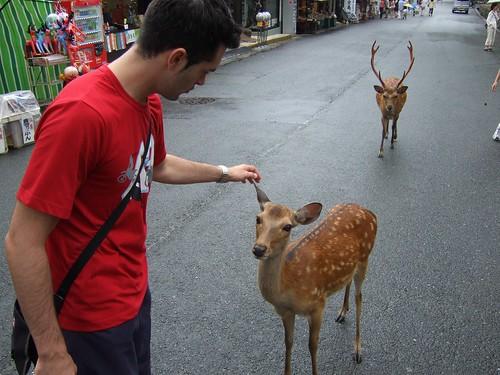 1108 - 21.07.2007 - Nara