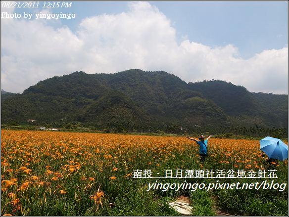 南投魚池_頭社活盆地金針花20110821_R0041552