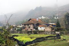 72_LAO81300095 (TC Yuen) Tags: vietnam sapa hmong terracefarming locai