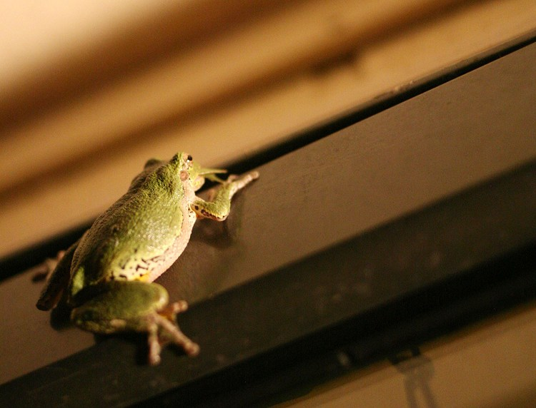 09-03-frog5