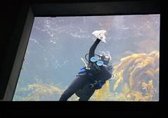 2011-08-20 Monterey County 021 Monterey Bay Aquarium