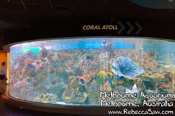 MELBOURNE AQUARIUM-42