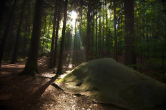 (Maik Keizer) Tags: light color forest landscape licht bomen woods republic czech rays sunrays lanscape landschap woud tsjechi tsjechie