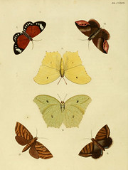 n119_w1150 (BioDivLibrary) Tags: catalogsandcollections lepidoptera pictorialworks suriname butterflies moths smithsonianinstitutionlibraries sil smithsonian institution libraries bhl:page=30081826 dc:identifier=httpbiodiversitylibraryorgpage30081826 nmnhexhibit dazzlingdiversity