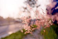 Taichung_20110821_17 (Lordcolus) Tags: road sunset plant flower color film kodak taiwan olympus negative taichung 台灣 台中 160nc olympusom2n nikonsupercoolscan9000ed 特三號 zuikoautomacro502