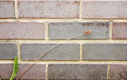 Minimalist bricks by Helen in Wales