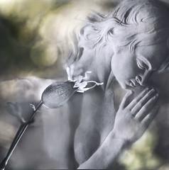 Silenzi (Ivan del Bene) Tags: flowers italy art texture canon prayer softfocus marble gubbio preghiera marblestatue silences tokina100mmf28atxprod mytexture elisabettaronchi
