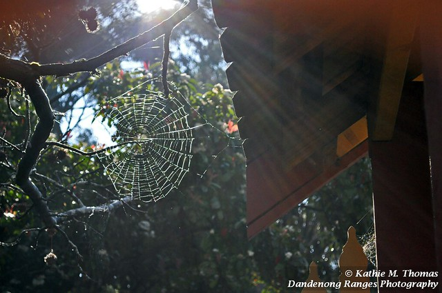 Web in the early sun