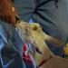 IMGP6995-1_ekka-handfeeding-goat