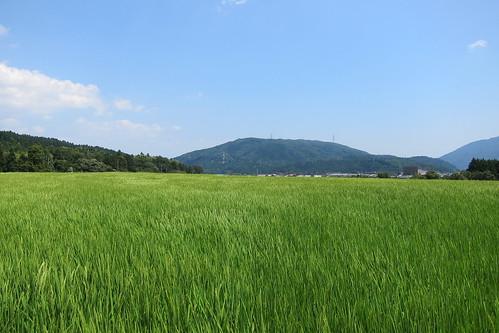 関ヶ原古戦場 #2