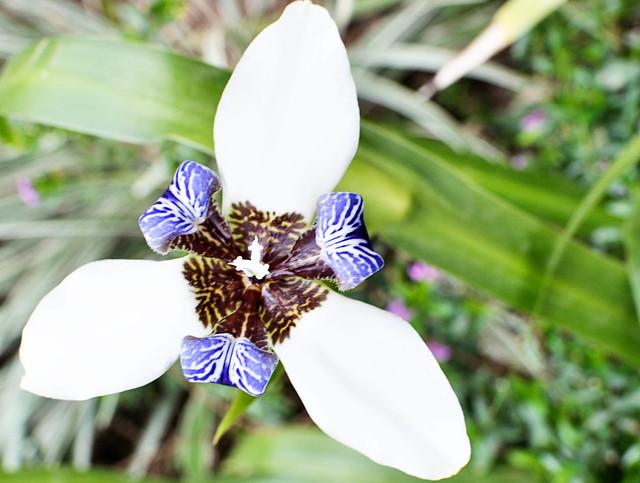 flower in sa